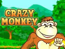 Автомат Crazy Monkey